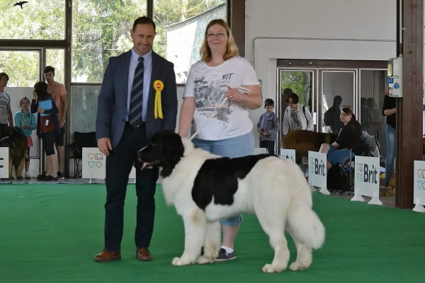 International dog show Ceske Budejovice