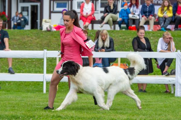 International dog show Mlada Boleslav