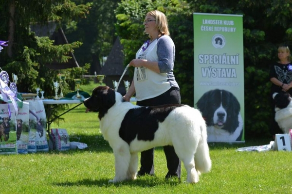 Landseer Club CZ champion